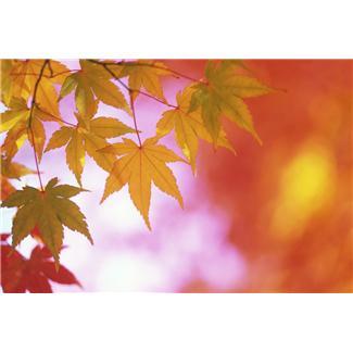 leavesmicro